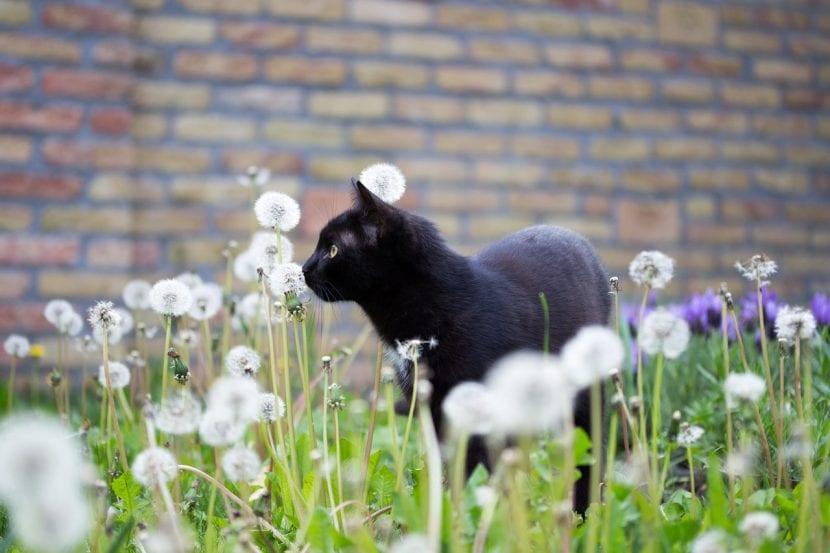 El abandono de gatos está considerado como delito