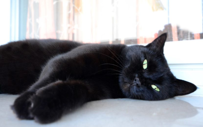 Los gatos negros pueden tener los ojos verdes