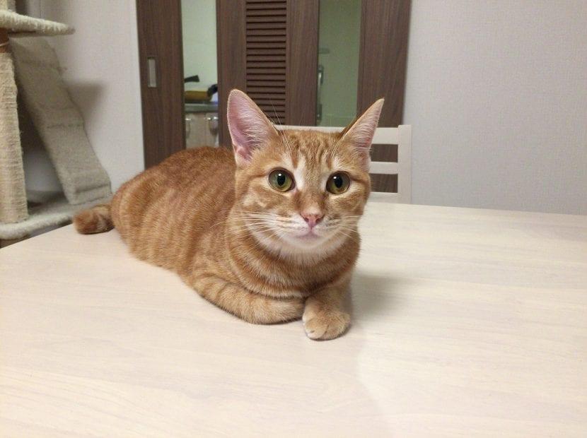 Tu gato vivirá mejor dentro de casa que fuera