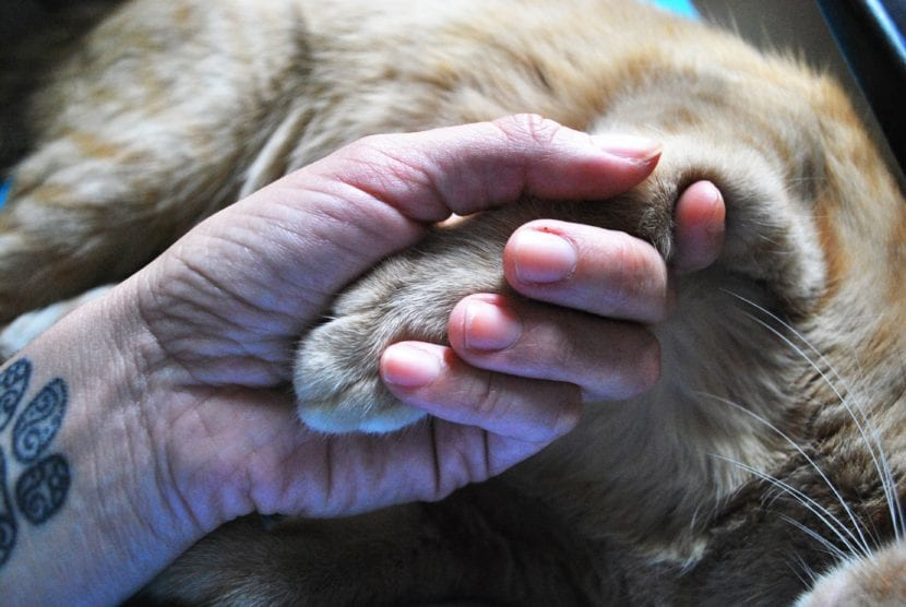 Los gatos y las personas pueden ser buenos amigos