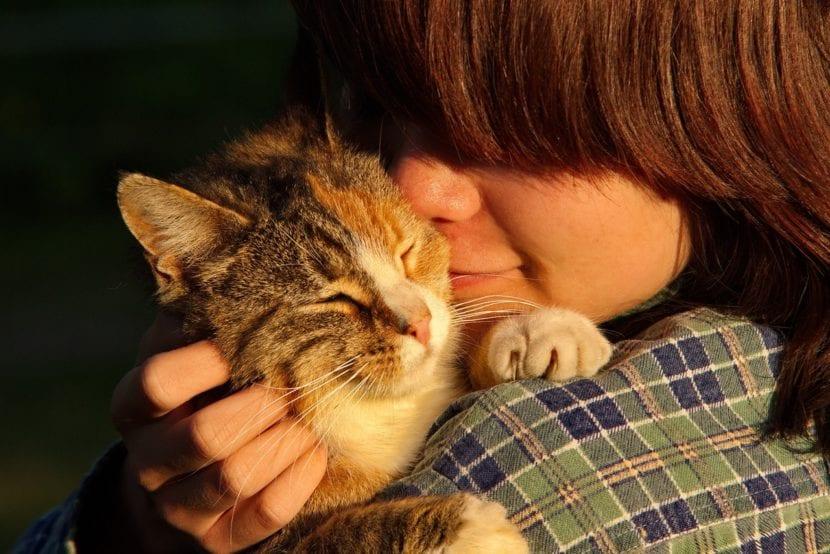 Los gatos pueden llevarse bien con las mujeres