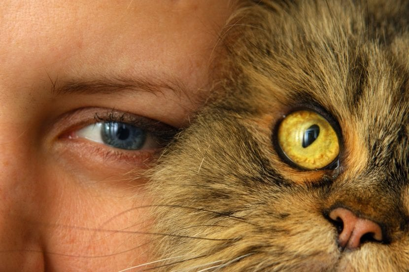 El gato puede llevarse muy bien con las personas si lo tratan con respeto y cariño