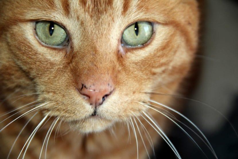 Descubre por qué tu gato pierde peso y cuídalo