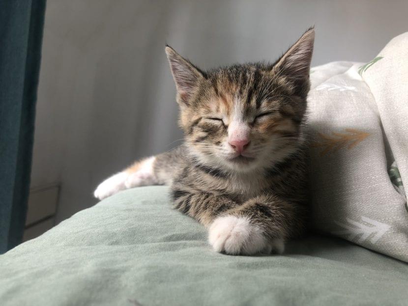 El gatito crece rápido