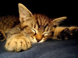Los gatitos necesitan dormir tranqulos