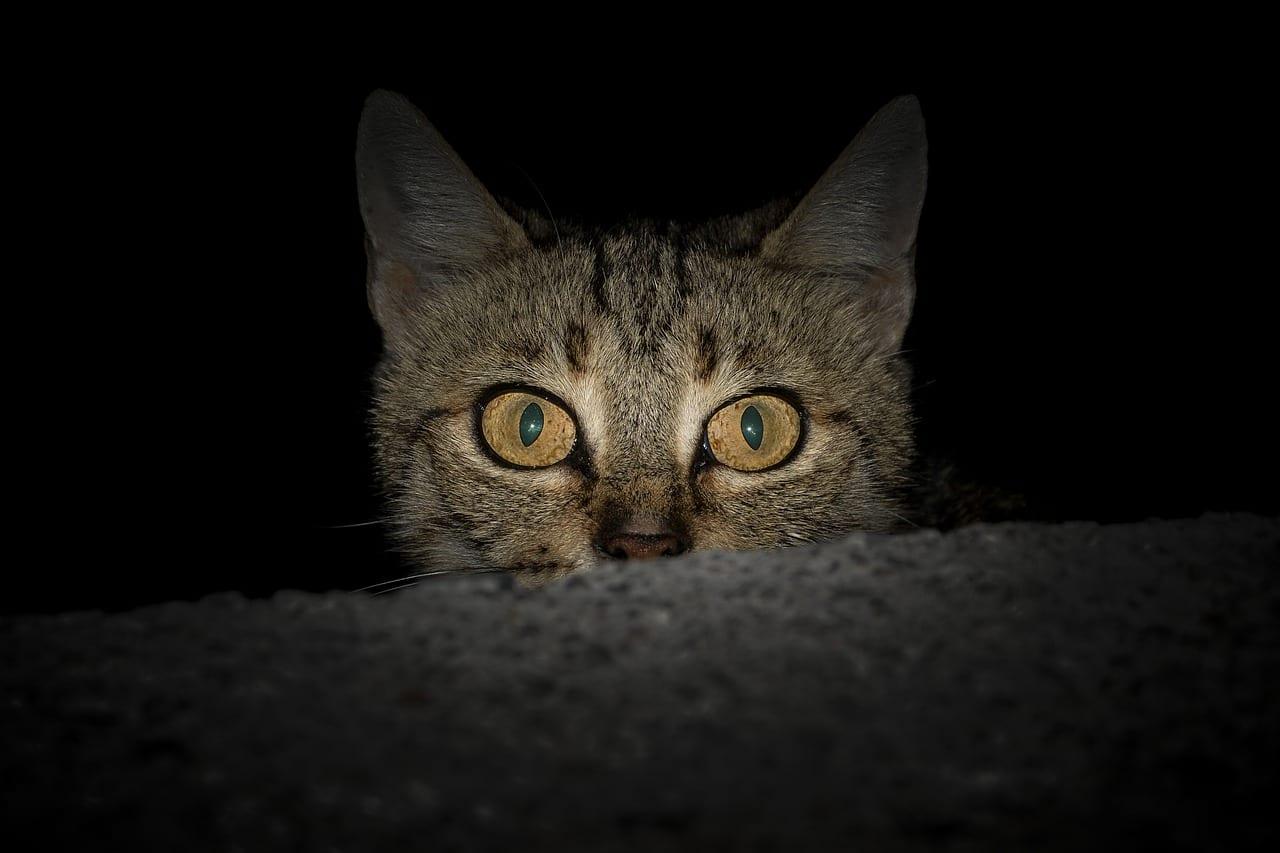 Los gatos son muy activos por la noche