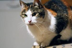 Todos los gatos tienen huellas dactilares