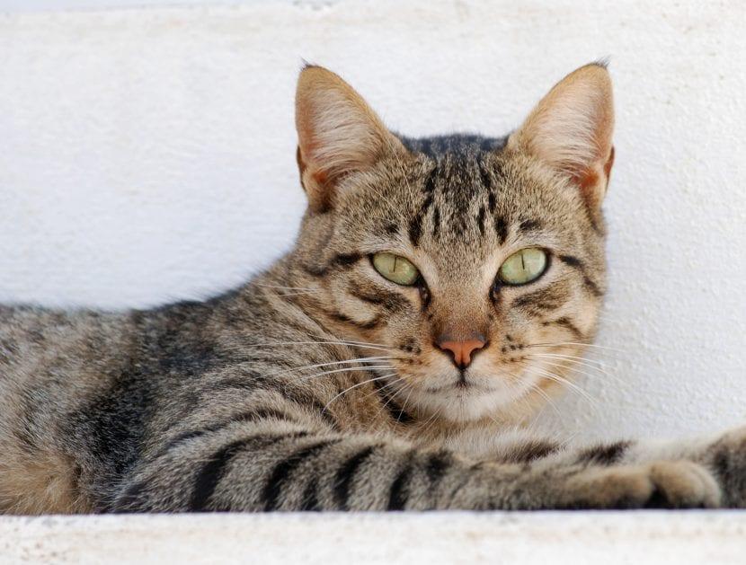 Ayuda a tu hijo a superar la pérdida de un gato