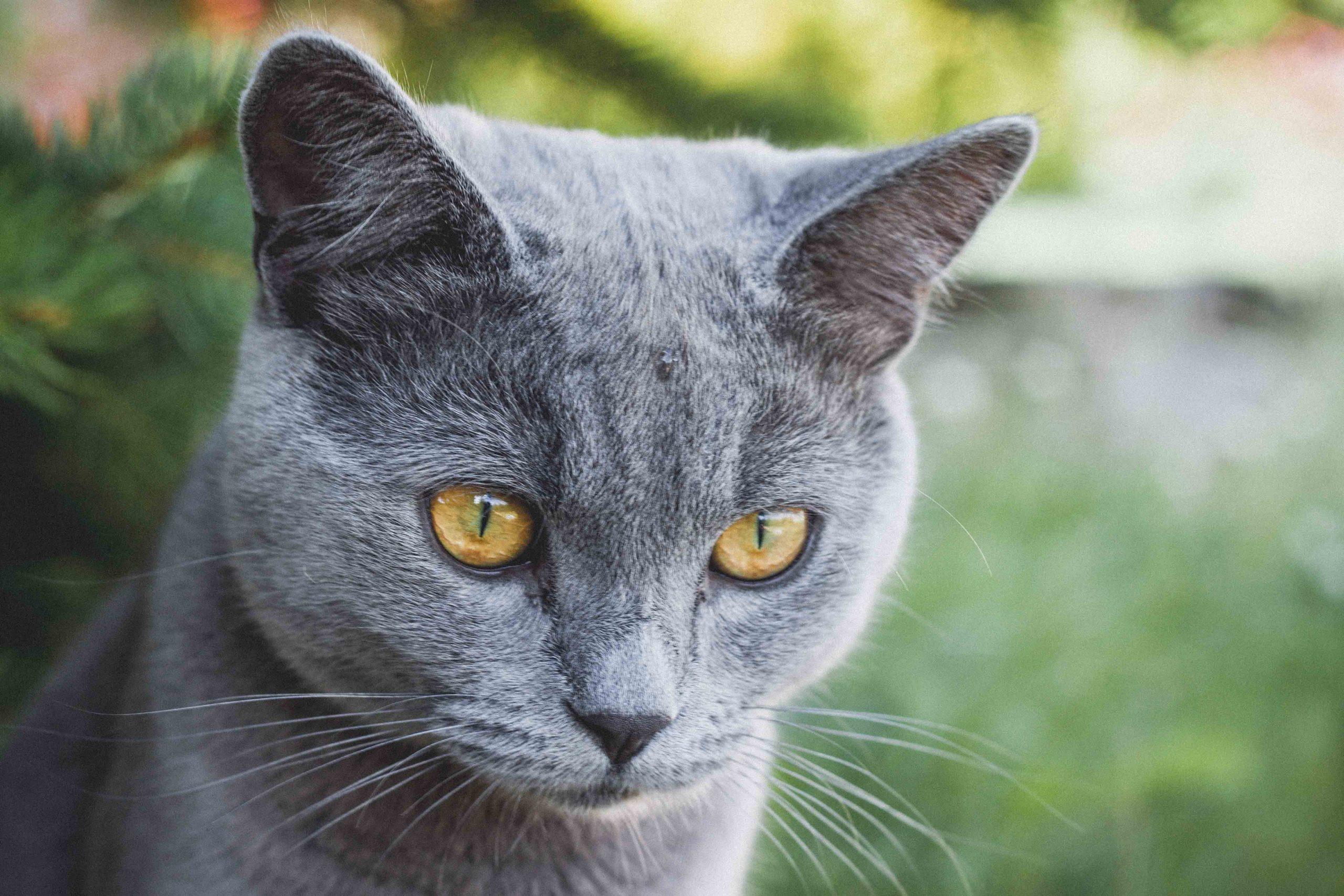 Protege a tu gato para que no pierda peso a temprana edad