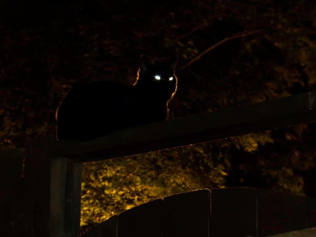 Los gatos ven por la noche