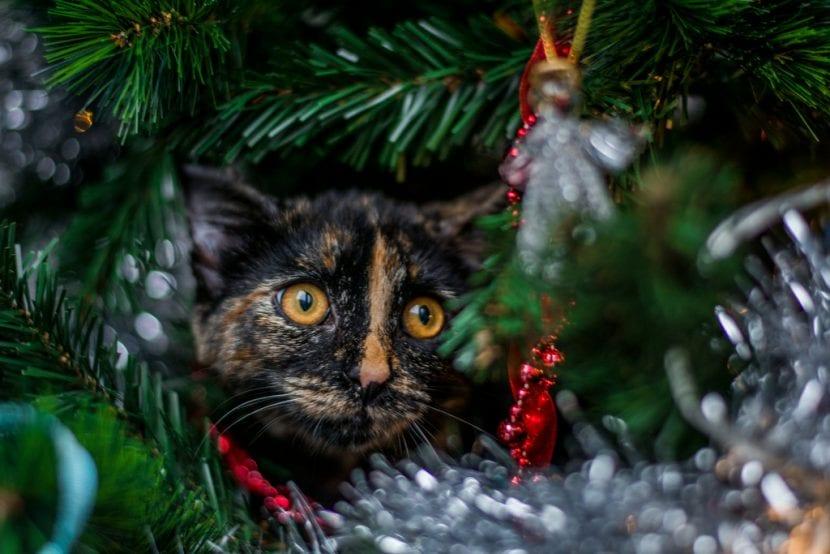 Apunta estos consejos para proteger el árbol de navidad