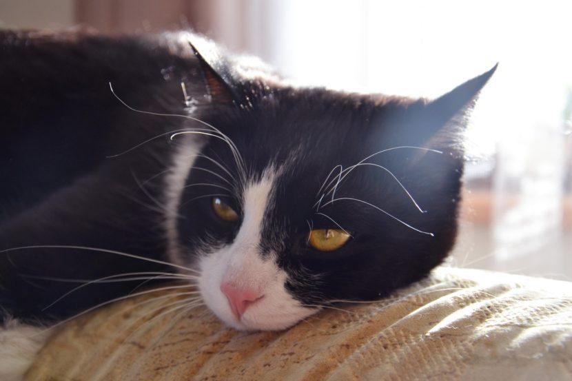 Los gatos pueden vivir en pisos