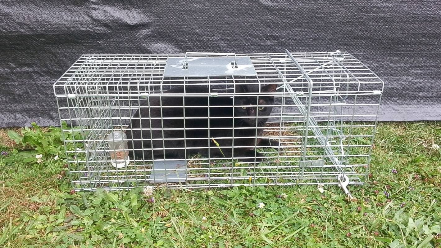 Una jaula trampa para gatos a veces es útil