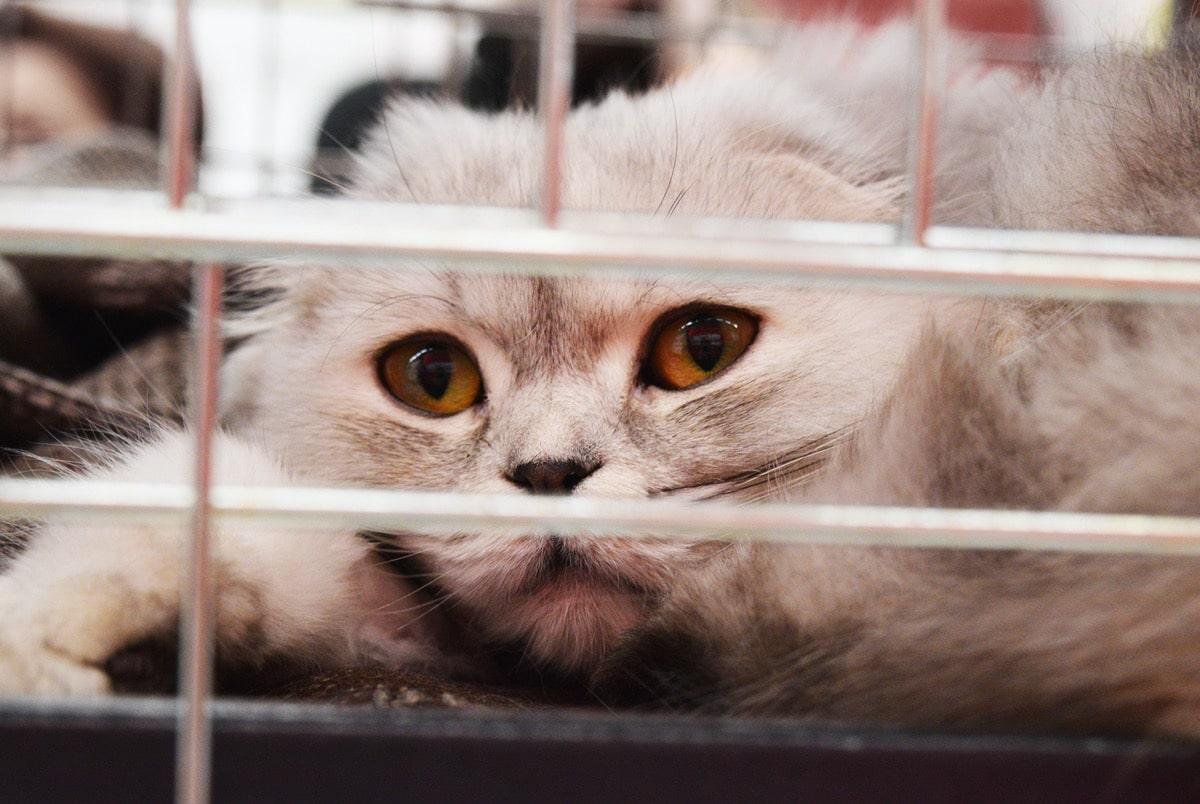 Si tu gato tiene gusanos, debes llevarlo al veterinario