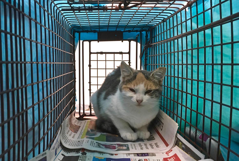 Consigue que tu gato entre en una jaula trampa sin hacerle daño