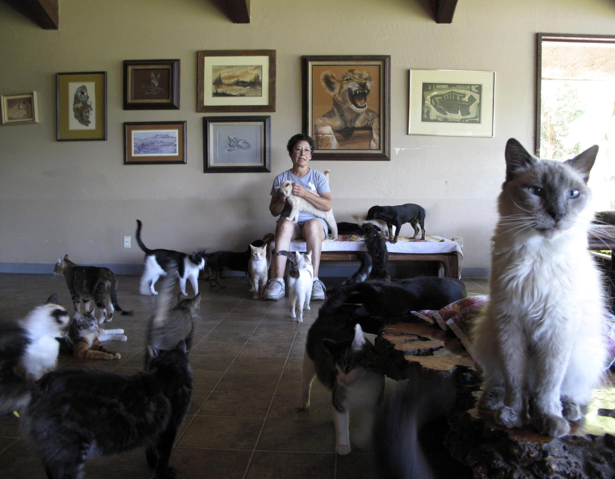La loca de los gatos con gatos