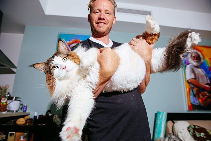 El gato Samson