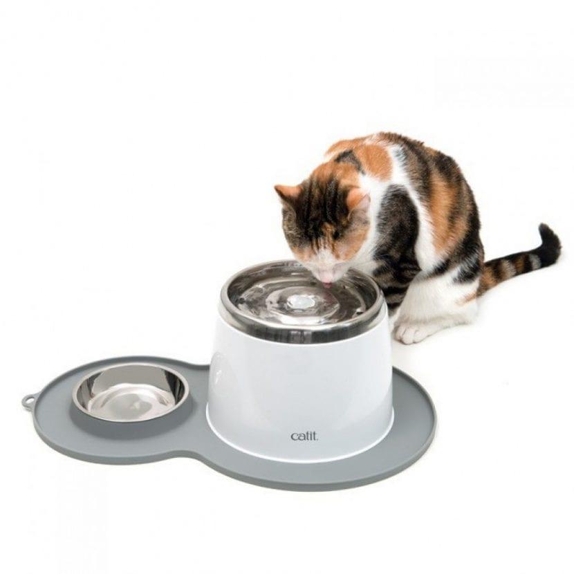 Dale a tu gato un bebedero tipo fuente para que beba más agua
