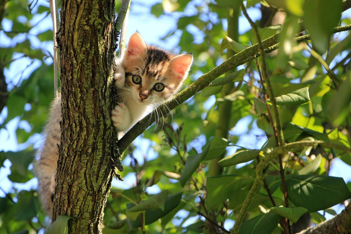 Los gatos pueden morir si se caen