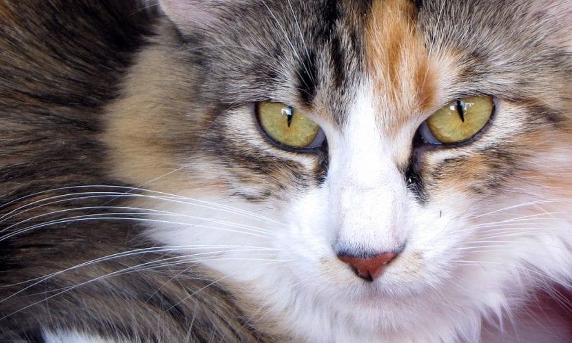Adopta a un gato