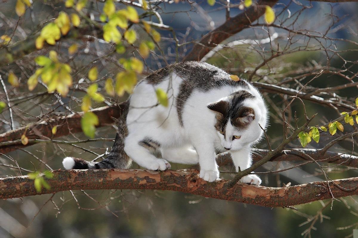 Las caídas de los gatos a veces son preocupantes