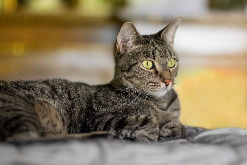 Si tu gato tiene ansiedad ayúdale evitando hacer ruido