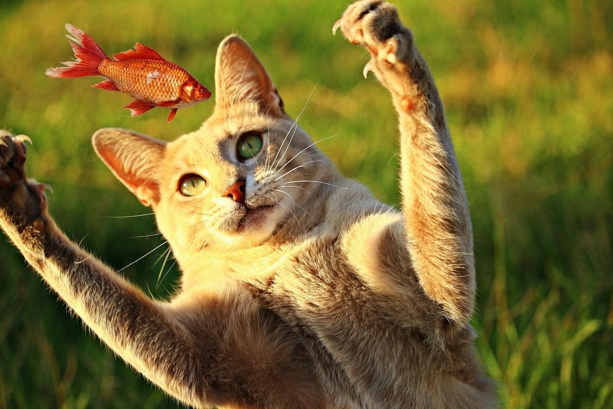 Los gatos juegan con el pescado
