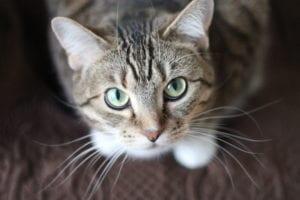 Los gatos son grandes observadores
