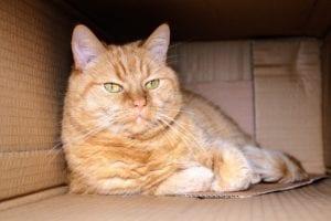 La deshidratación es un problema muy serio para los gatos