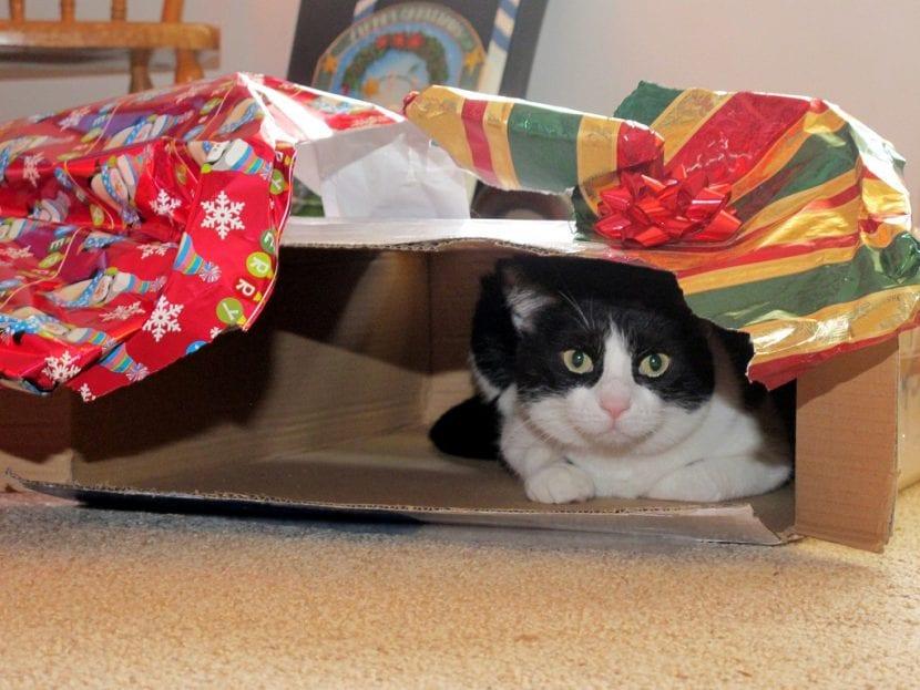 Regálale una caja de cartón a tu gato