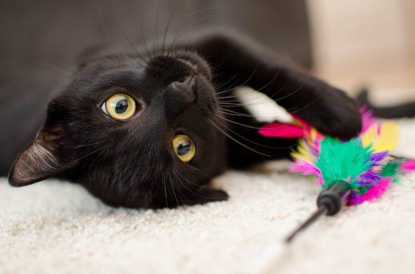 Regálale un juguete a tu gato