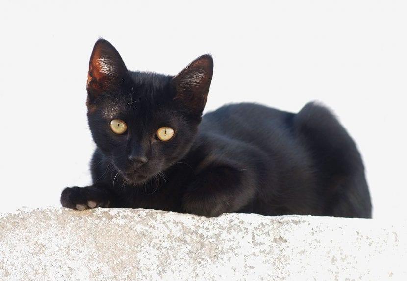Adopta a un gato y salva dos vidas