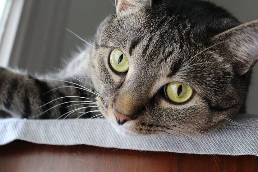 Gato sobre un mueble