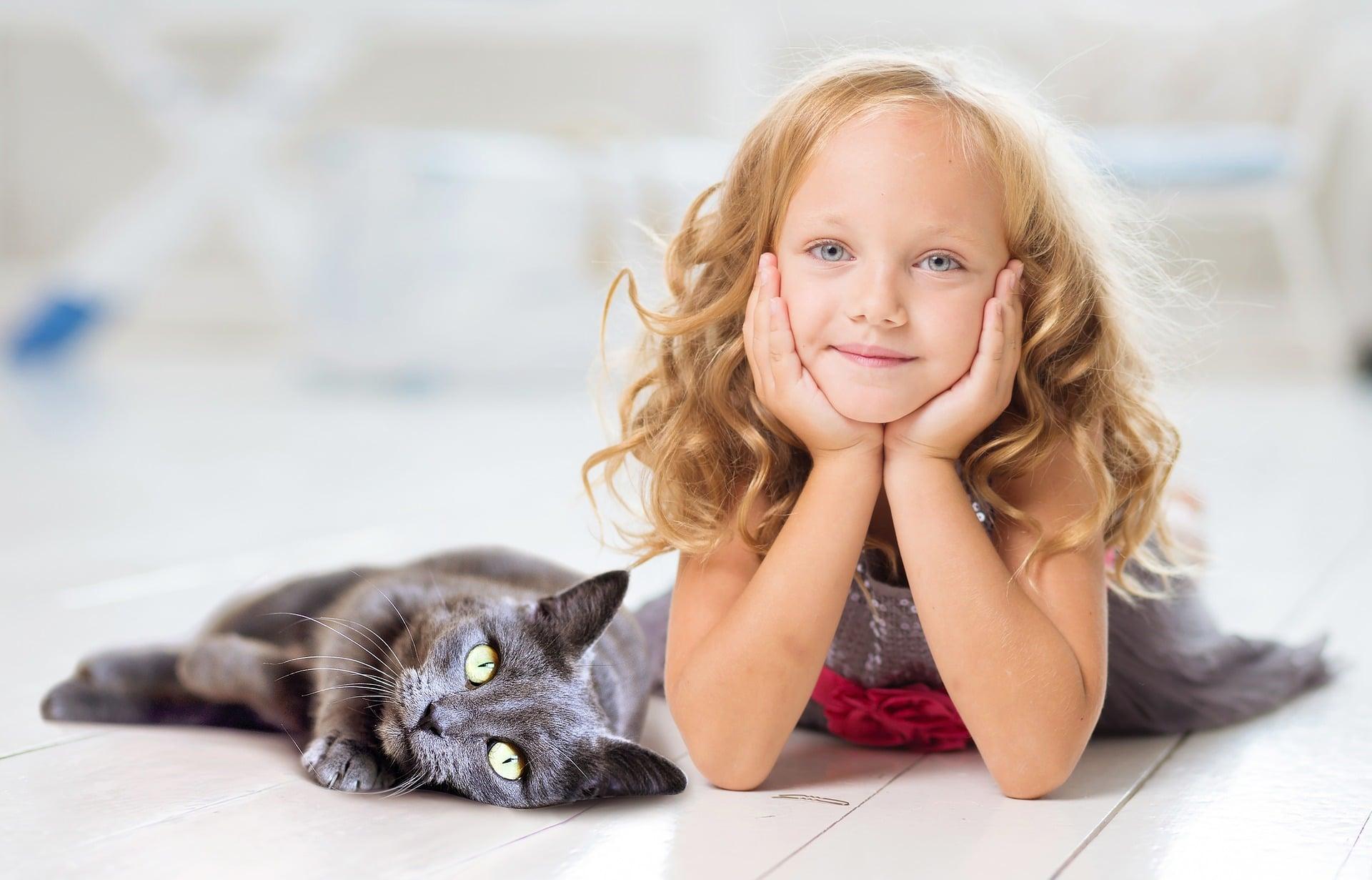 Descubre por qué te sigue el gato