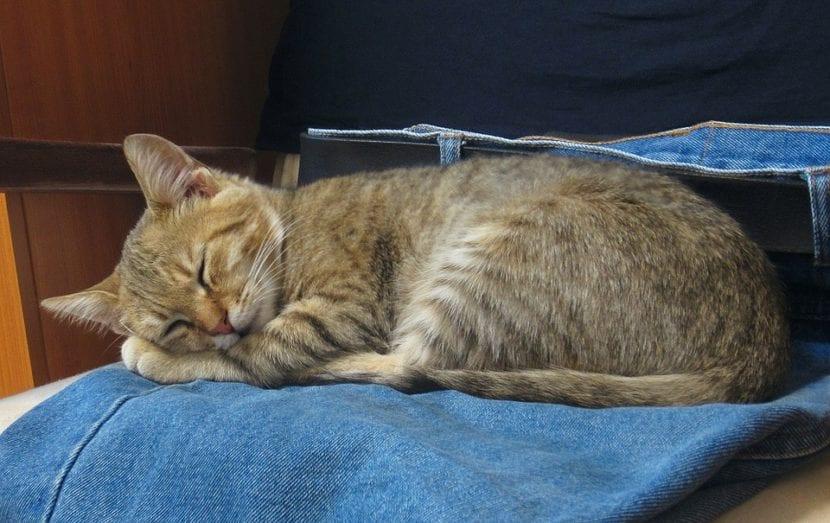Gato durmiendo sobre pantalones