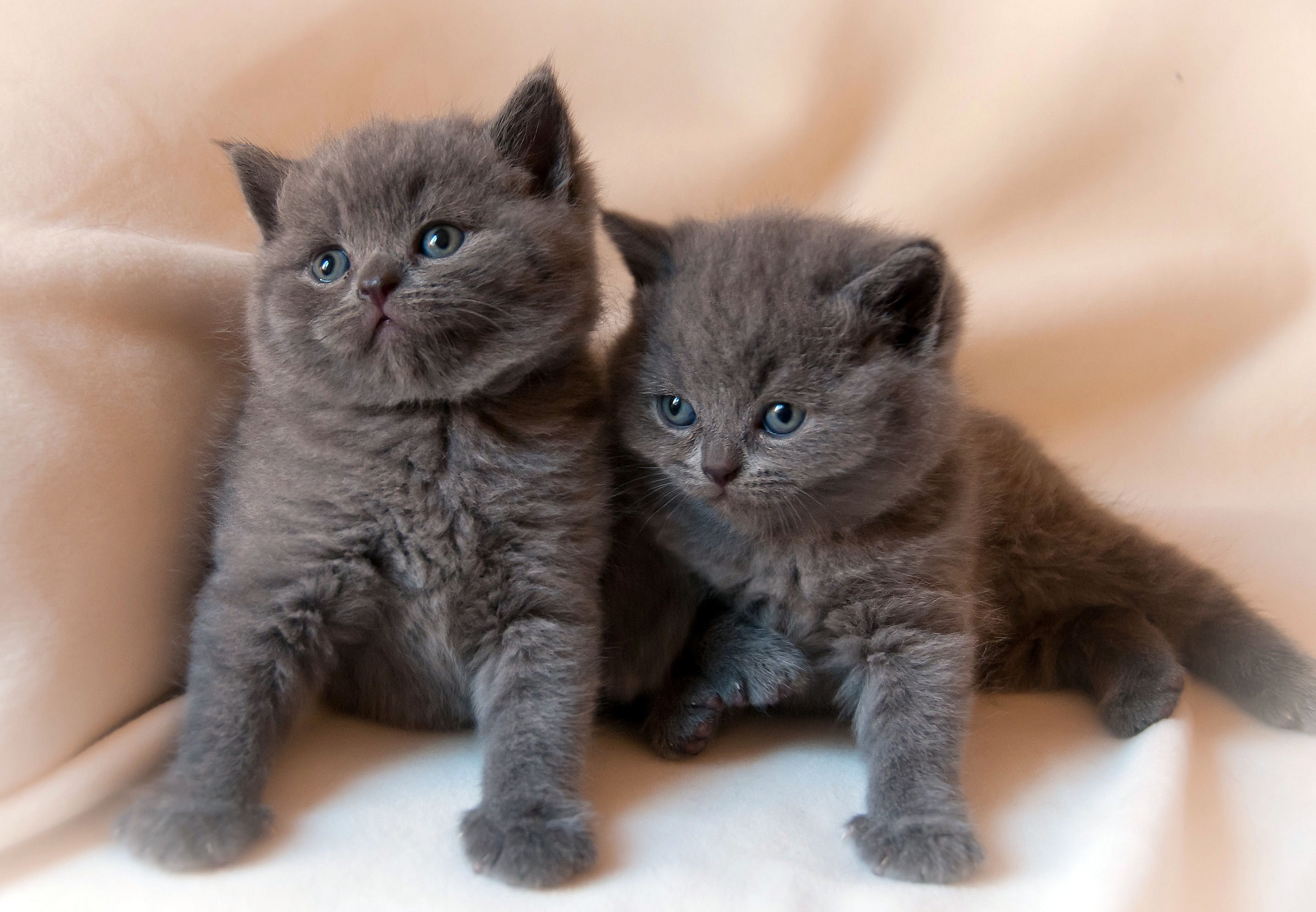 Los gatitos crecen rápido