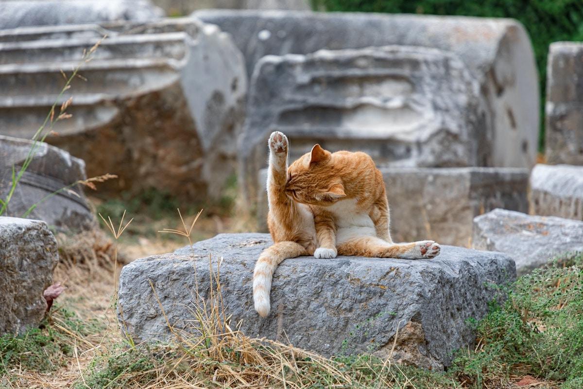 Los gatos se acicalan a diario