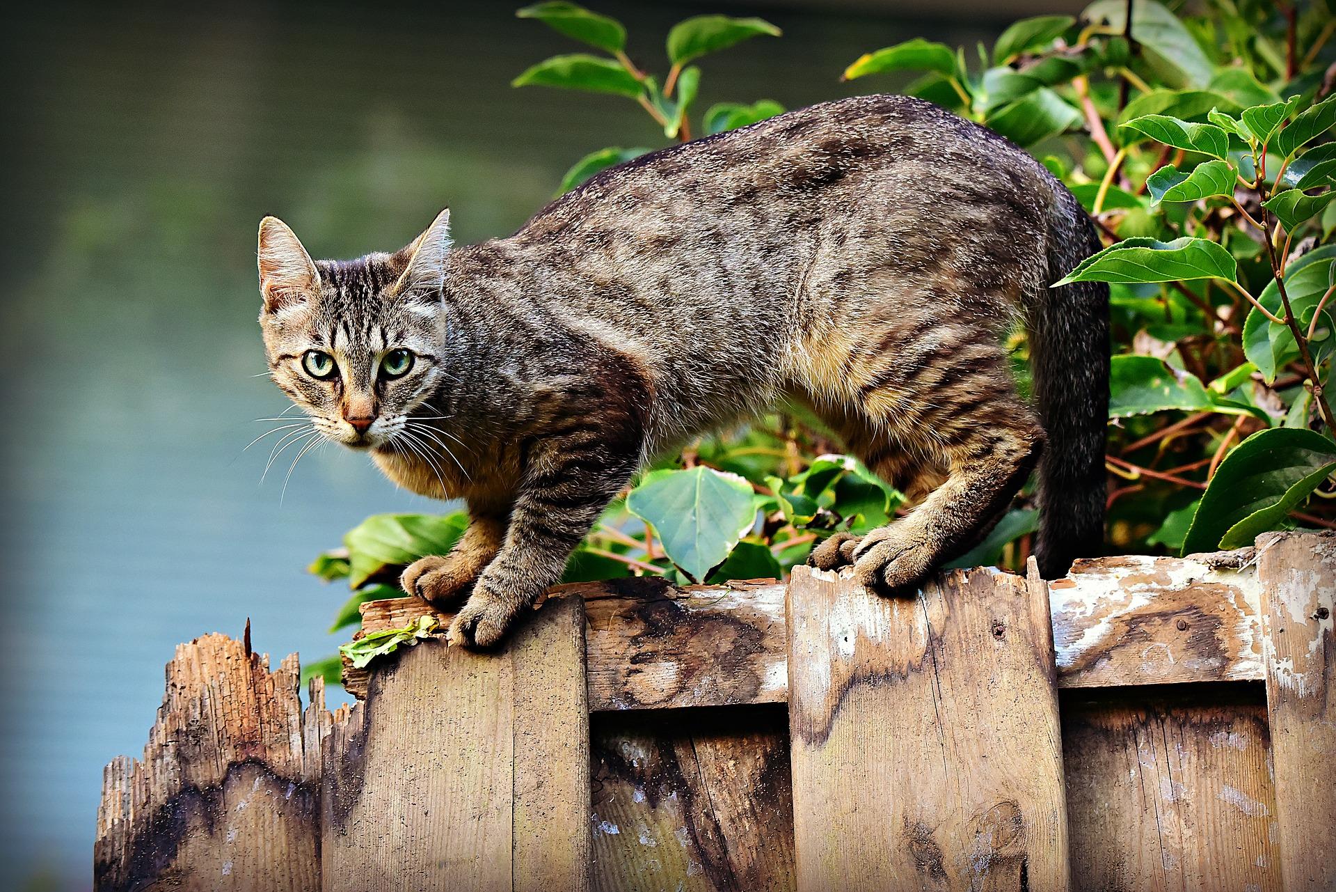 Los gatos callejeros viven menos que los caseros