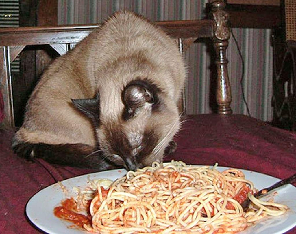 Gato comiendo espaguetis