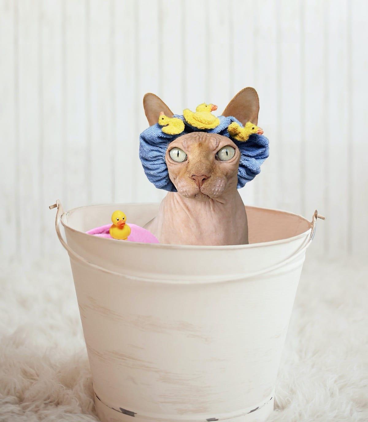 A los gatos no les suele gustar que los bañen