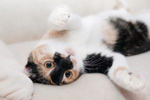 Los gatos pueden vivir más que los perros