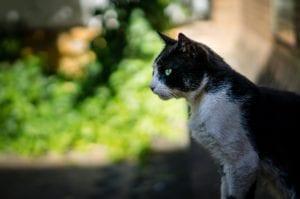 Gato en el jardín