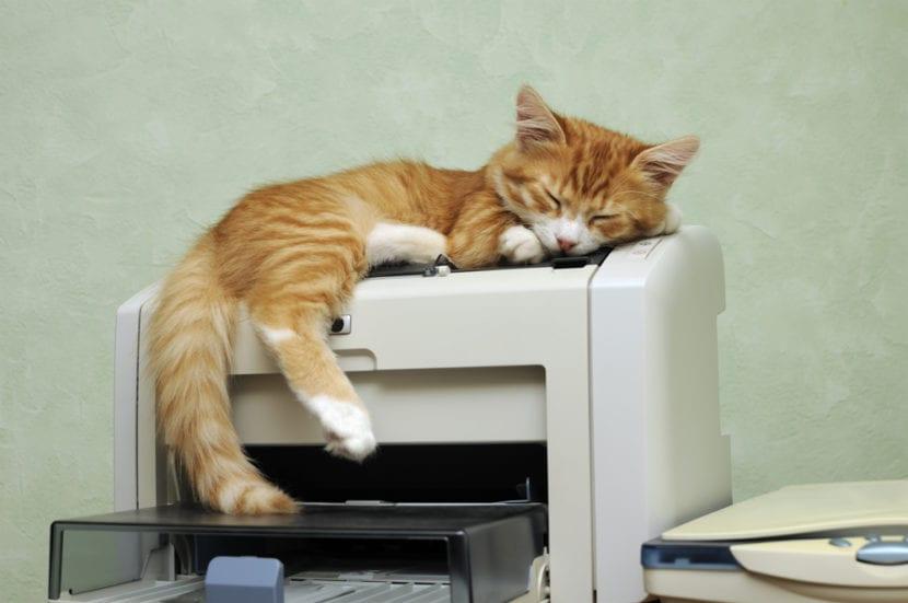 Gato en la oficina
