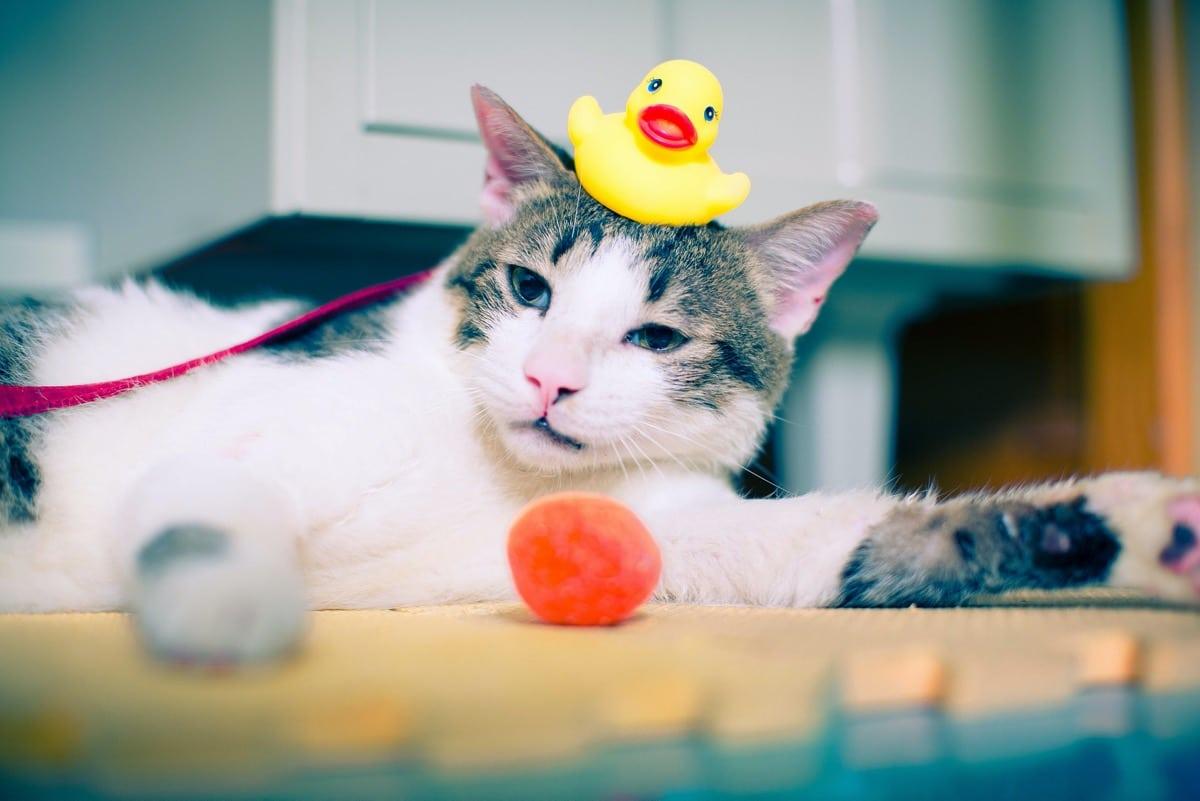 Baña a tu gato muy de vez en cuando