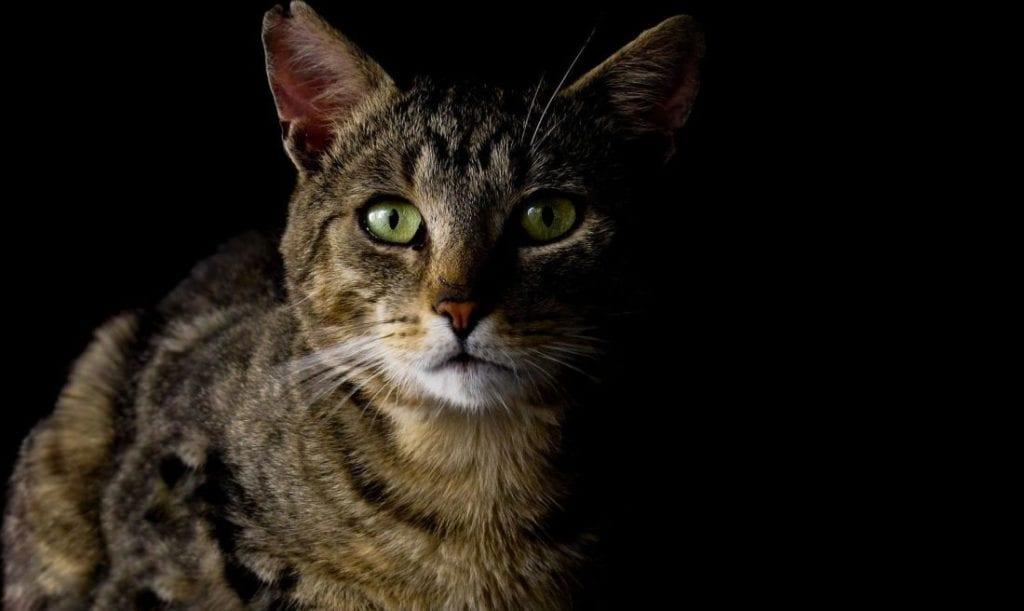 El maltrato en gatos es algo que debería de desaparecer