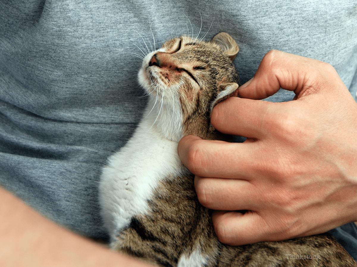 El gato puede tener pulgas