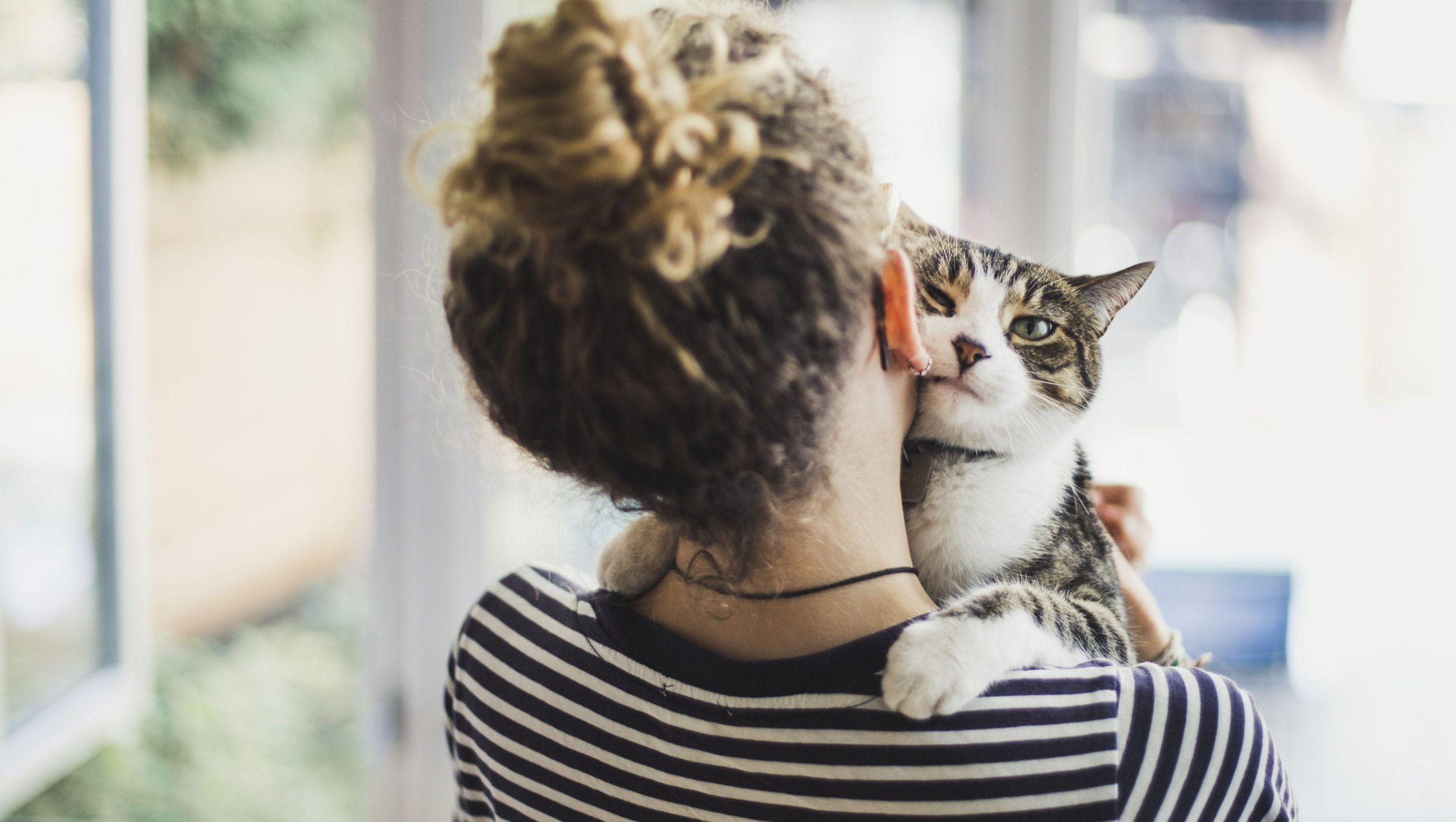 A los gatos les gusta estar con los humanos
