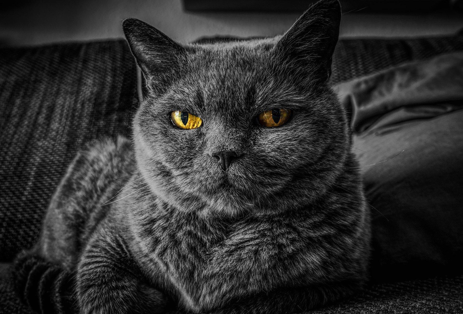 Enseña a tu gato con paciencia y respeto
