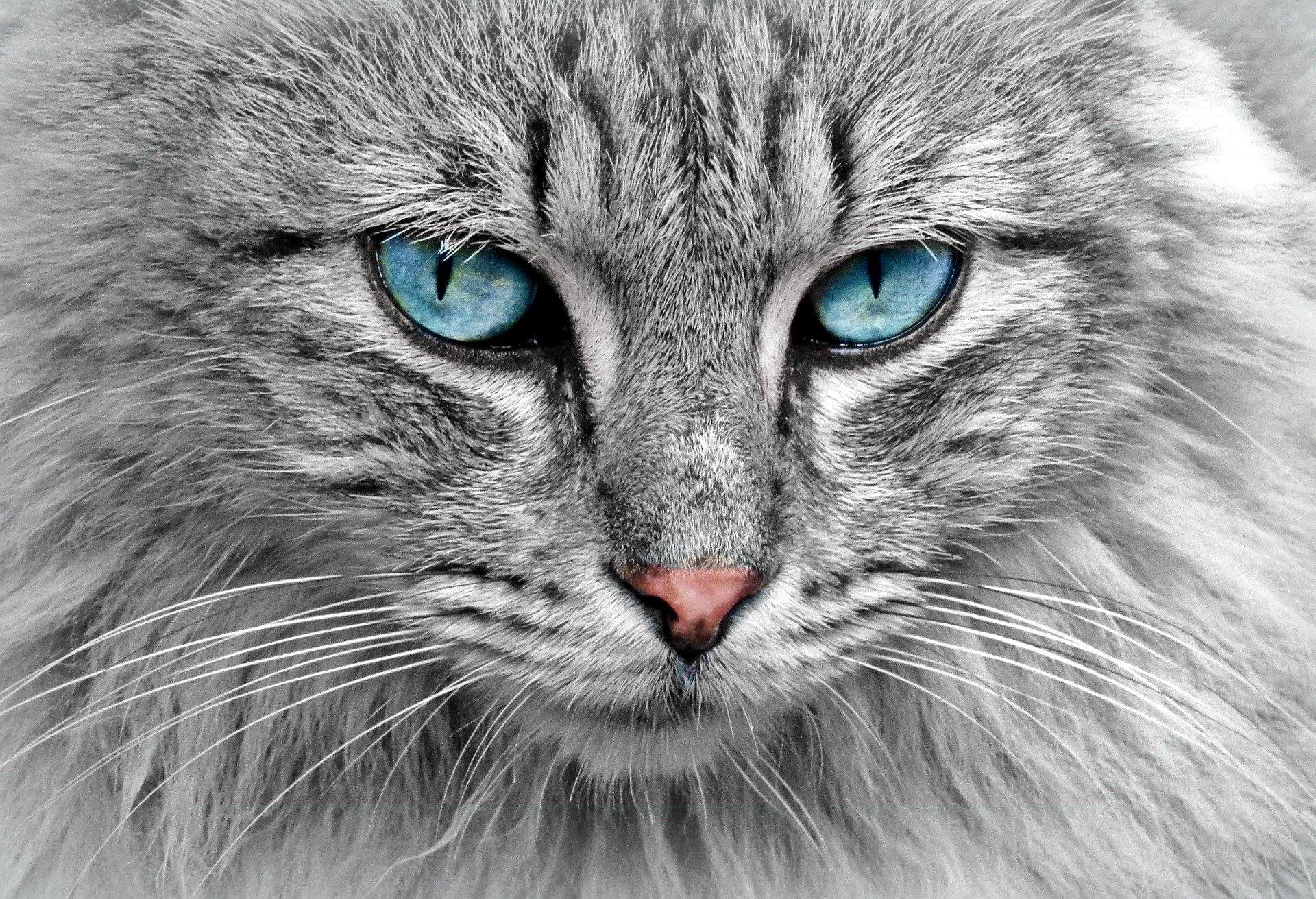 Escucha a tu gato y préstale mucha atención