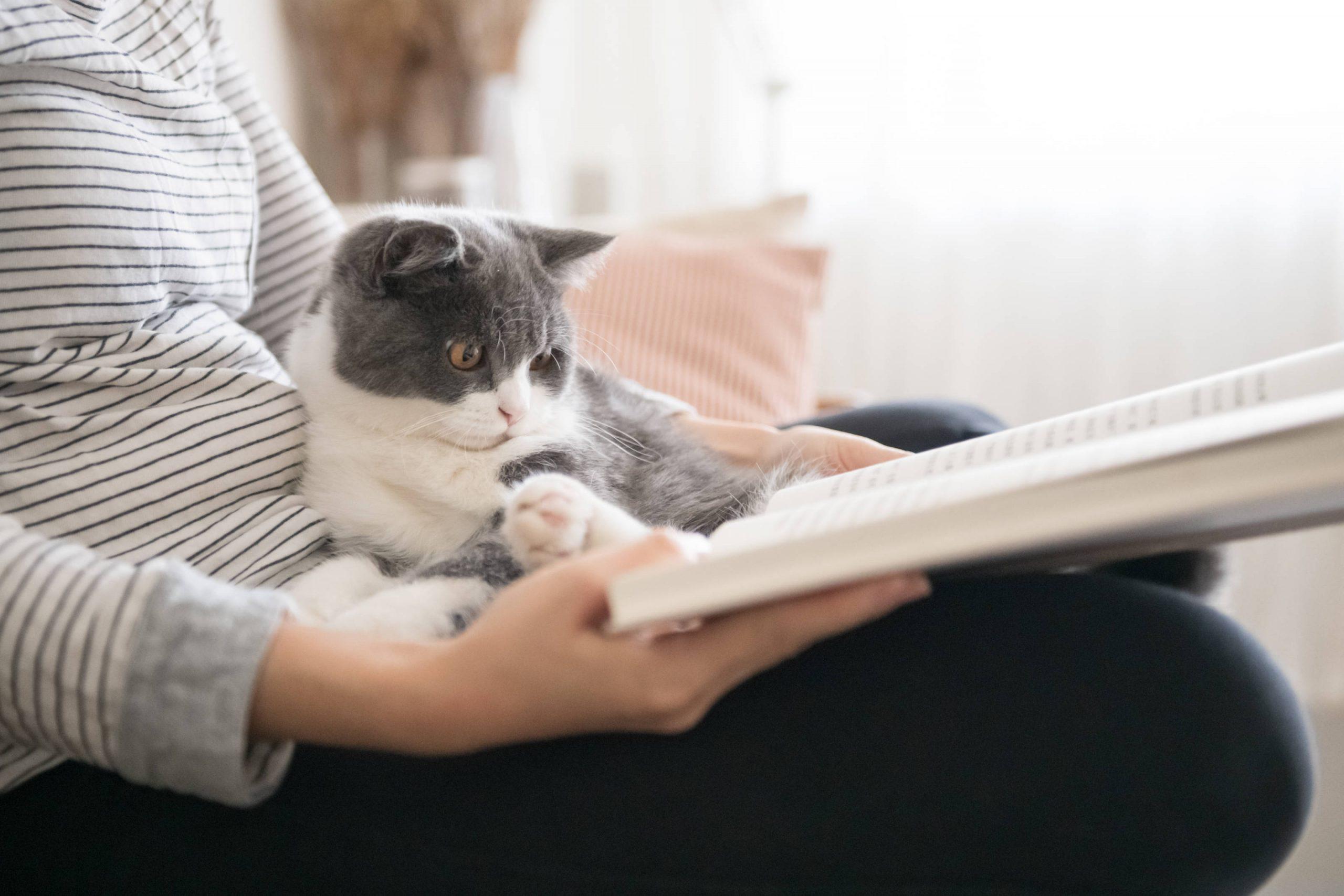 Los gatos son muy sociables